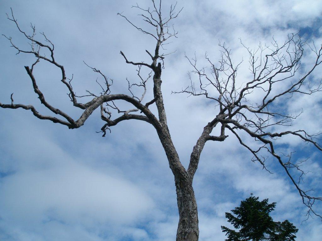gray-hair-枯れた木