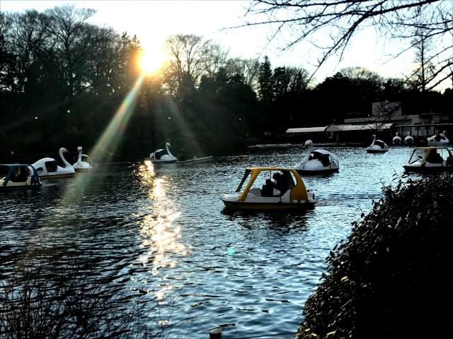 ボートが浮かぶ井の頭公園の池の写真